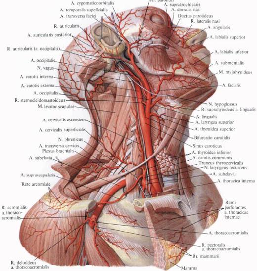 vagus hipertónia tünetei