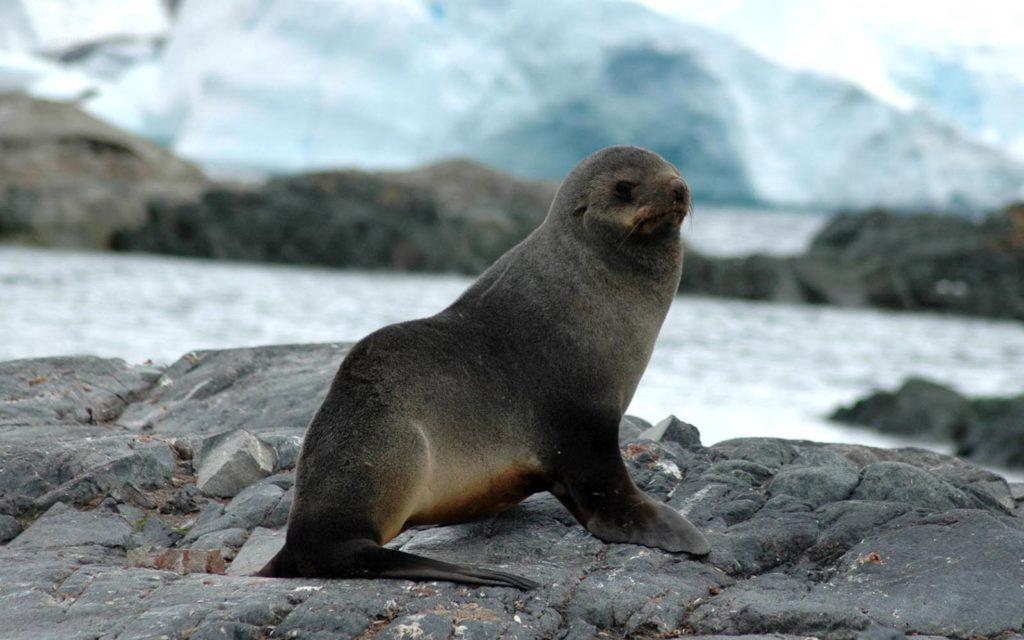 seal-016
